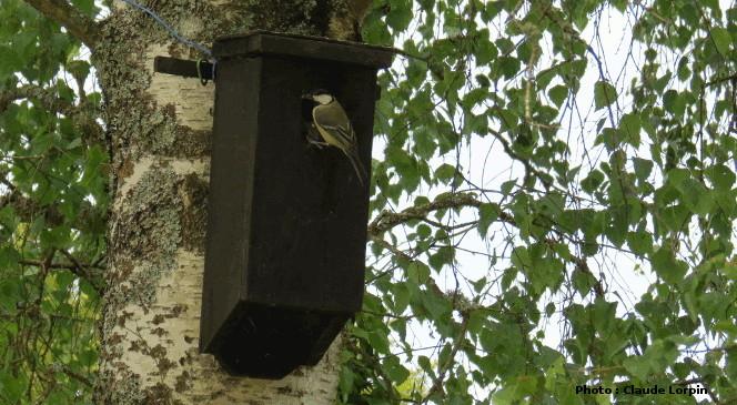 Nichoir dobservation des oiseaux sauvages avec fen/être et nichoir en aluminium /à sens unique